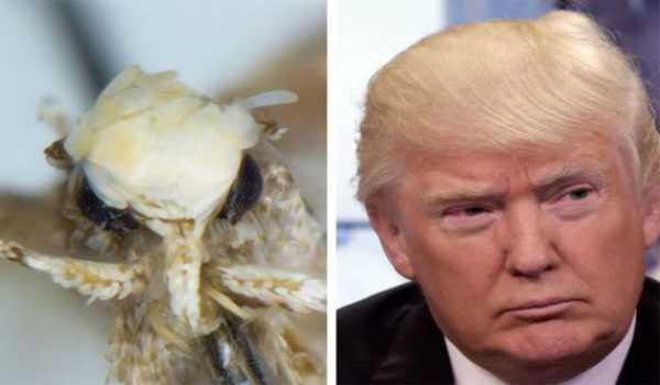 20170118-serangga-spesis-trump